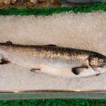 サケの名前と由来|鮭の歴史